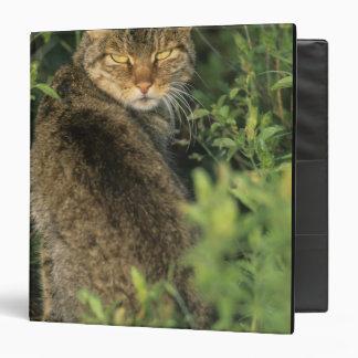 """Libyca salvaje africano del gato, del Felis), ante Carpeta 1 1/2"""""""