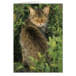 Libyca salvaje africano del gato, del Felis), ante Tarjeta