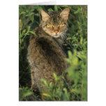 Libyca salvaje africano del gato, del Felis), ante Tarjeta De Felicitación