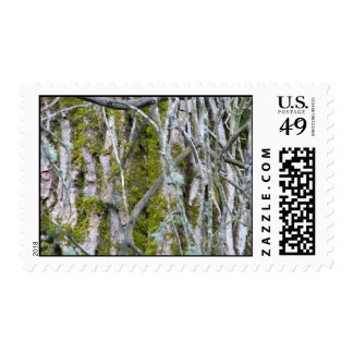 Lichen, Bark, and Branches Postage