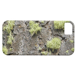 Lichen Covered Bark of a Giant Sequoia Tree iPhone SE/5/5s Case