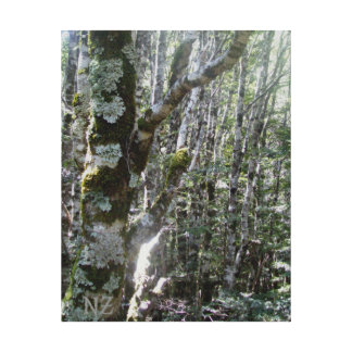 Lichen covered tree trunks canvas