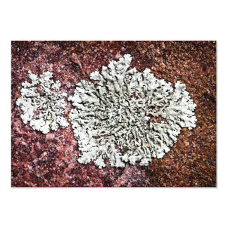 Lichen growing on rock personalized invitations
