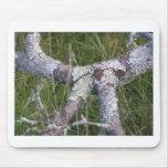 Lichen Mousepad