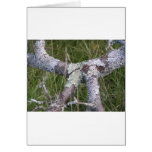 Lichen on Bark Card
