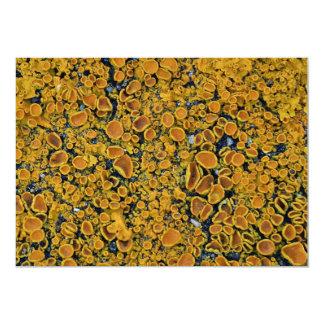 Lichen on rock invitation