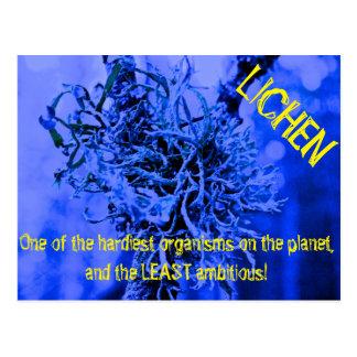 Lichen Postcard