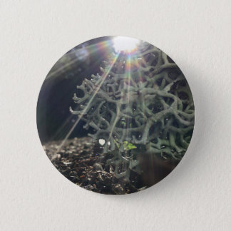 Lichen Rays Button