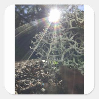 Lichen Rays Square Sticker
