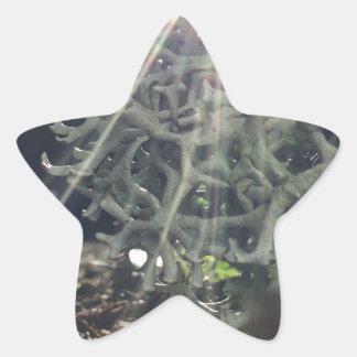 Lichen Rays Star Sticker