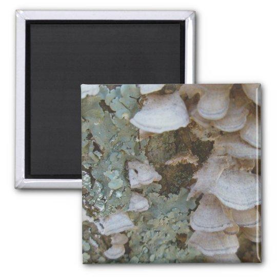 Lichen & Shelf Fungus Magnet