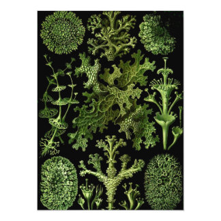 Lichens Green and Black Card