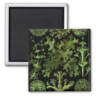 Lichens Green and Black Magnet