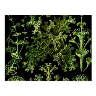 Lichens Green and Black Postcard