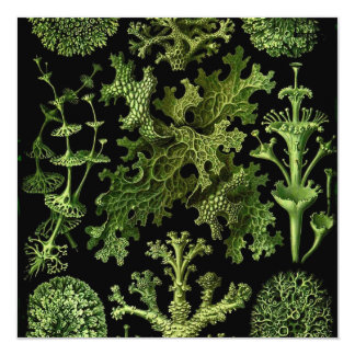Lichens in Green and Black Card