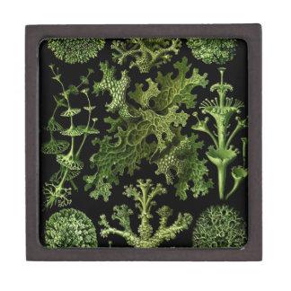 Lichens in Green and Black Keepsake Box