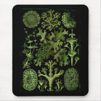 Lichens in Green and Black Mouse Pad