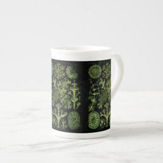 Lichens in Green and Black Tea Cup
