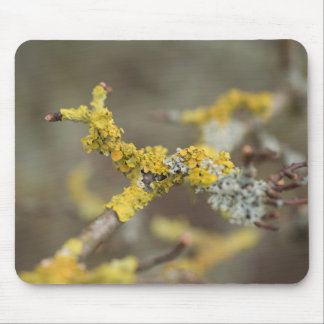 Lichens Mouse Pad
