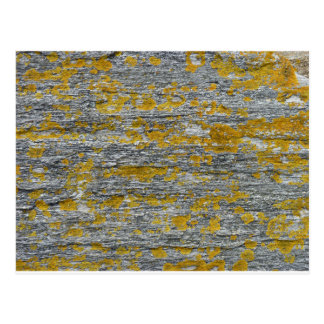 Lichens on granite stone postcard