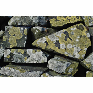 Lichens on wall photo cut outs