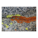 Lichens, Sequoia National Park Cards