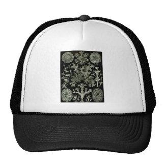 Lichens Trucker Hat