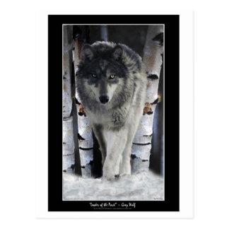 LÍDER de las postales del lobo del del PAQUETE