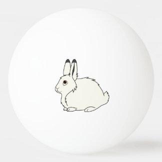 Liebres árticas blancas pelota de ping pong