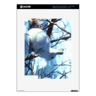 Liebres árticas pegatinas skins para iPad 3