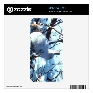 Liebres árticas iPhone 4 calcomanías