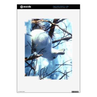 Liebres árticas skin para el iPad 2