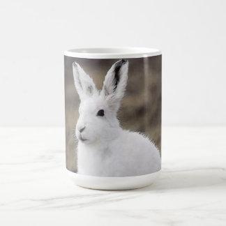 Liebres árticas tazas de café