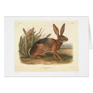 Liebres de California por Audubon (0177A) Tarjetón
