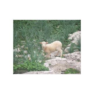 Lienzo Envuelto con foto de oveja Impresiones En Lona Estiradas