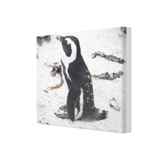 Lienzo Envuelto De Pingüino Lienzo Envuelto Para Galerías