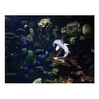Life Aquatic Post Card