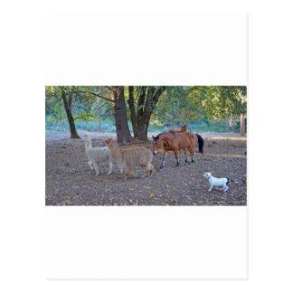 Life at the ranch postcard