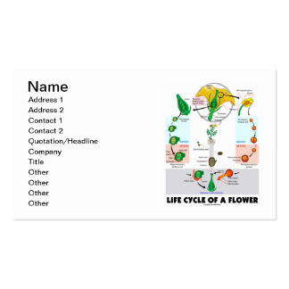 Life Cycle Of A Flower (Angiosperm) Double-Sided Standard Business Cards (Pack Of 100)
