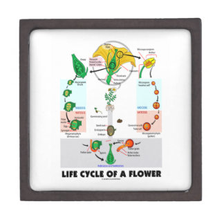 Life Cycle Of A Flower (Angiosperm) Jewelry Box