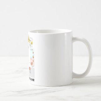 Life Cycle Of A Flower (Angiosperm) Classic White Coffee Mug