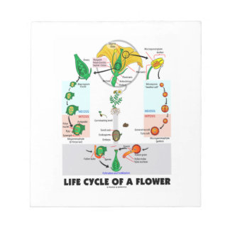 Life Cycle Of A Flower (Angiosperm) Notepad