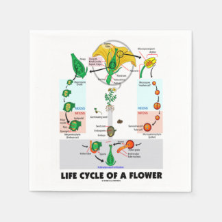 Life Cycle Of A Flower (Angiosperm) Paper Napkin