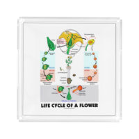 Life Cycle Of A Flower (Angiosperm) Square Serving Trays
