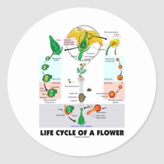 Life Cycle Of A Flower (Angiosperm) Stickers