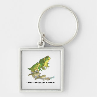 Life Cycle Of A Frog From Egg To Tadpole To Frog Keychains