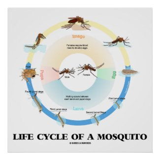 Life Cycle Of A Mosquito Biology Larva Pupa Imago Posters