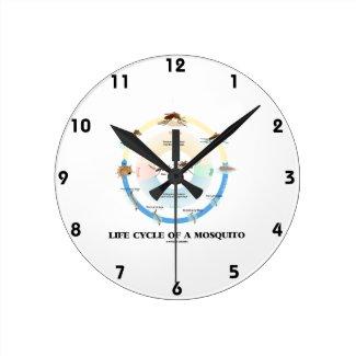 Life Cycle Of A Mosquito (Egg Larva Pupa Imago) Clock