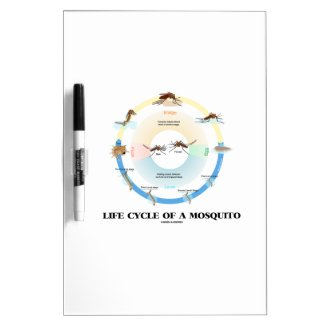 Life Cycle Of A Mosquito (Egg Larva Pupa Imago) Dry-Erase Whiteboard