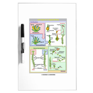 Life Cycle Of A Typical Moss Bryophyte Dry Erase Board
